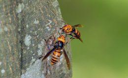 スズメバチの写真